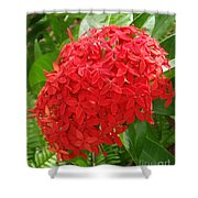 A Crown Of Ixora Shower Curtain