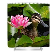 A Curious Duck And A Water Lily Shower Curtain