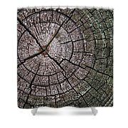 A Cut Above - Patterns Of A Tree Trunk Sliced Across Shower Curtain