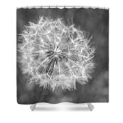 A Dandelion Black And White Shower Curtain