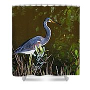 A Darling At Ding Darling Shower Curtain