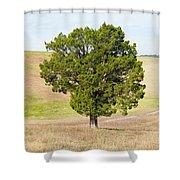 A December Cedar Shower Curtain