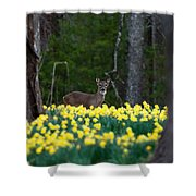 A Deer And Daffodils 4 Shower Curtain