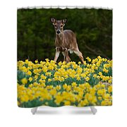A Deer And Daffodils IIi Shower Curtain
