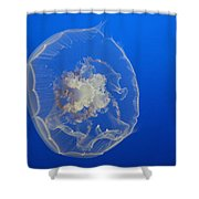 A Delicate Sea Jelly Shower Curtain