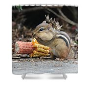 A Delicious Treat - Chipmunk Eating Corn Shower Curtain