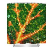 A Designer With Intention Shower Curtain by Rick Furmanek