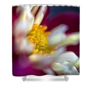 A Different Kind Of Dahlia Shower Curtain