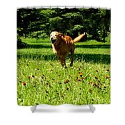 A Dogs Freedom Shower Curtain