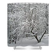 A Dogwood Sleeps While The Snow Falls Shower Curtain