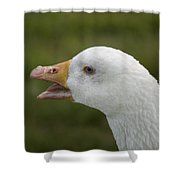 A Domestic Goose At A Wildlife Rescue Shower Curtain