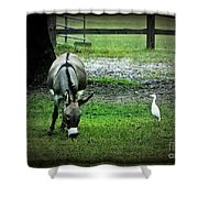 A Donkey And His Bird Shower Curtain
