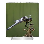 A Dragon Fly Contemplating  Shower Curtain