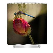 A Dragonfly Rests Momentarily On A Lotus Bud Shower Curtain