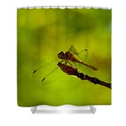 A Dragonfly Smile Shower Curtain