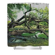 A Dramatic Change Of Perspective Shower Curtain