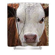 A Face You Can Love - Cow Art #609 Shower Curtain