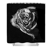 A Fading Rose Shower Curtain