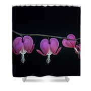 A Family Of Hearts Shower Curtain