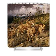 A Family Of Lions Shower Curtain