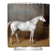 A Favourite Grey Horse Belonging To George Reed Standing In A Loose Box Shower Curtain