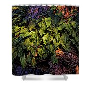 A Fern Botanical By H H Photography Of Florida Shower Curtain