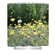 A Field Of Buttercups Shower Curtain