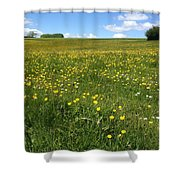 A Field Of Buttercups Shower Curtain