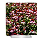 A Field Of Echinacea Shower Curtain