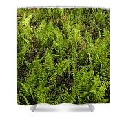 A Field Of Ferns Shower Curtain