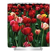 A Field Of Tulips Shower Curtain