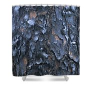 A Fire Scarred Tree Trunk Whose Thick Shower Curtain