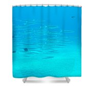 A Fish Shoal In Blue Water Shower Curtain