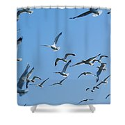A Flock Of Seagulls Shower Curtain