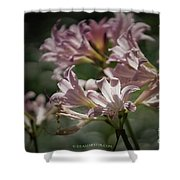 Peppermint Surprise Lily - A Floral Abstract Shower Curtain