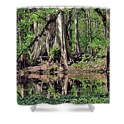 A Florida Riverine Forest 2 Shower Curtain
