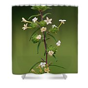 A Flower Tower Shower Curtain