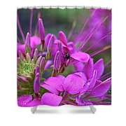 A Fly And A Flower Shower Curtain
