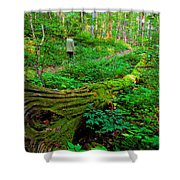 A Forest Stroll Shower Curtain