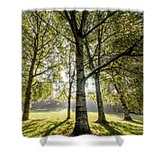 a Forest part 1 Shower Curtain