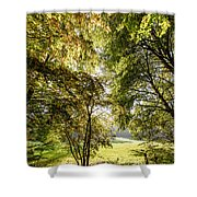 a Forest part 2 Shower Curtain