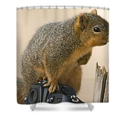 A Fox Squirrel Sciurus Niger Sits Shower Curtain