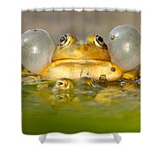 A Frog's Life Shower Curtain