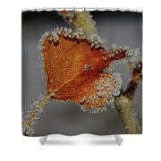 A Frosted Leaf  Shower Curtain