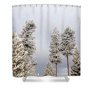 A Frosty Morning 2 Shower Curtain