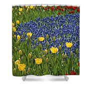 A Garden Of Colorful Tulips And Grape Shower Curtain