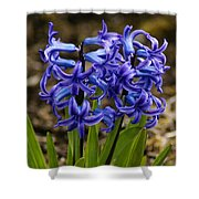 A Gathering Of Blues Shower Curtain