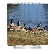 A Gathering Of Geese Shower Curtain