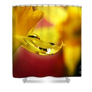 A Gift... Shower Curtain