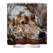 A Girl's Best Friend Shower Curtain